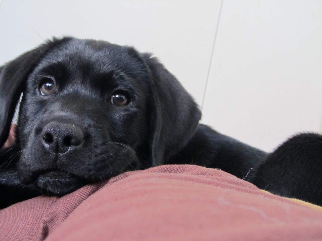 Therapieablauf bei der Hundephysio