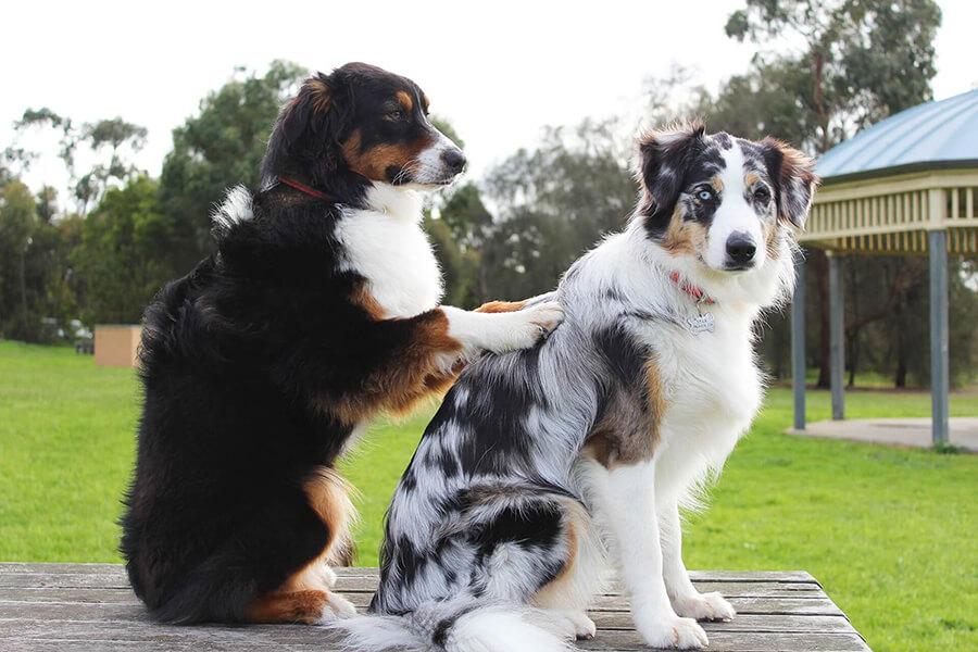 Physiotherapie Massage für Hunde