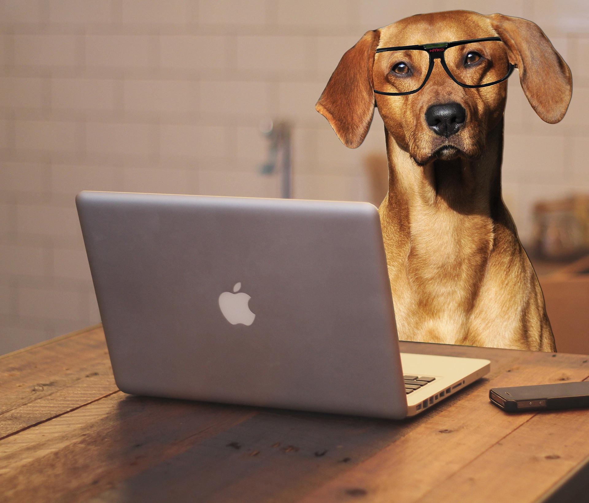 Neuigkeiten und Informationen rundum Hundephysiotherapie