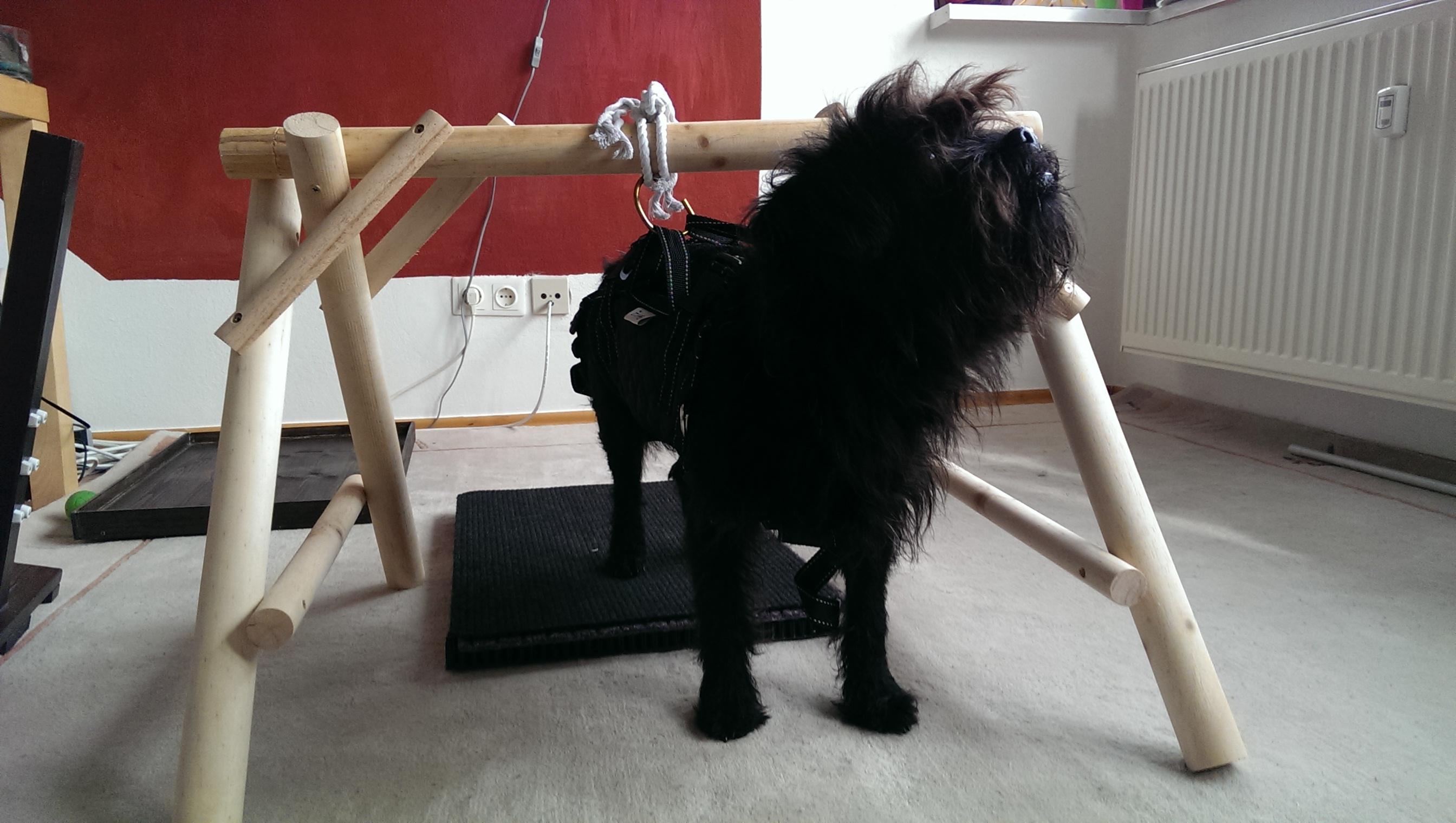 Neurologische BehandlungLähmung eines Hundes