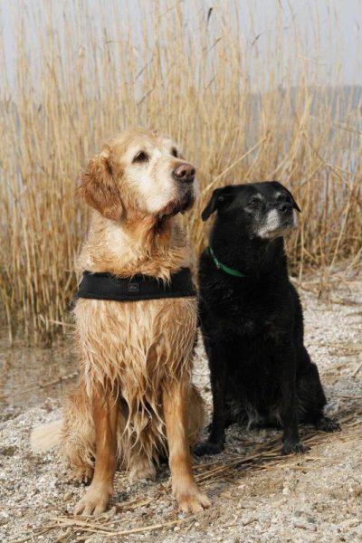 Seniorenhunde
